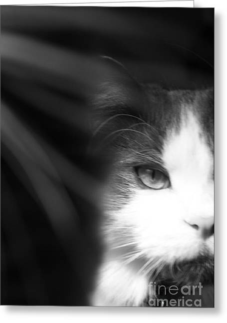 Lurking In The Shadows - Black And White Greeting Card by Scott D Van Osdol