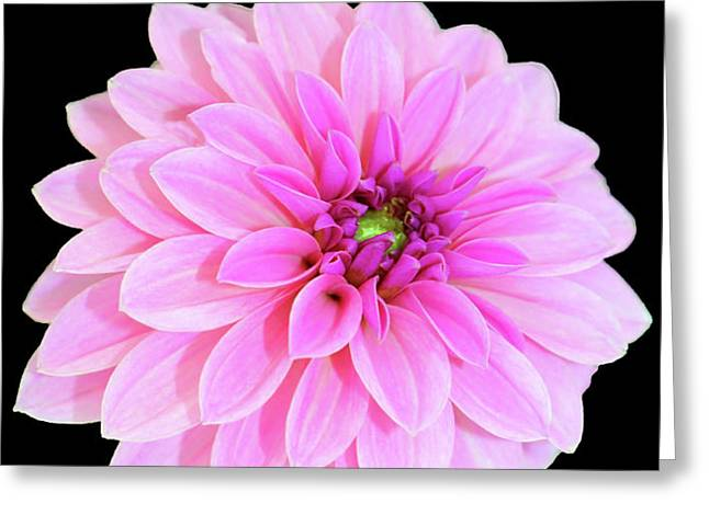 Luscious Layers Of Pink Beauty Greeting Card