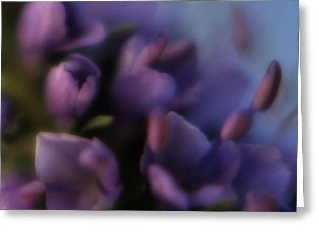Luscious Lilac Greeting Card by Bonnie Bruno