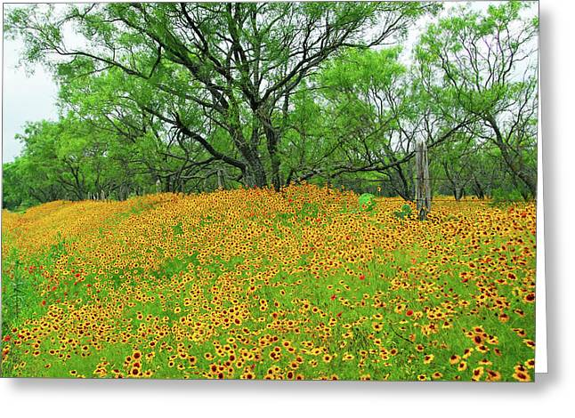 Lush Coreopsis Greeting Card