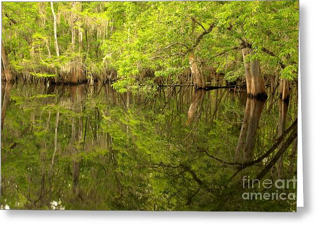 Lush Green Reflections At Manatee Springs Greeting Card by Adam Jewell