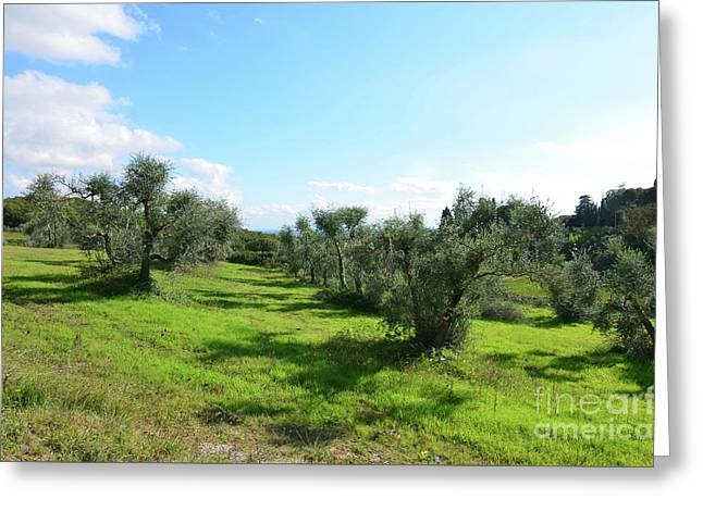 Lush Landscape In Tuscany Italy Greeting Card by DejaVu Designs