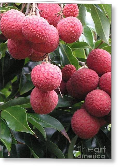 Lychee Greeting Card by Mary Deal
