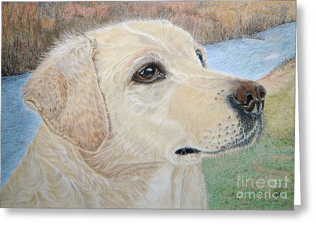 Working Dog Drawings Greeting Cards - Lynwater Sunny Alex Greeting Card by Yvonne Johnstone