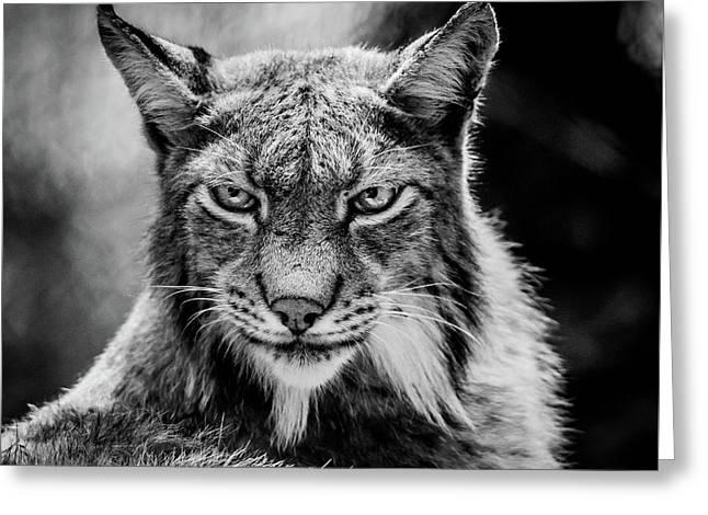 Lynx Portet Greeting Card