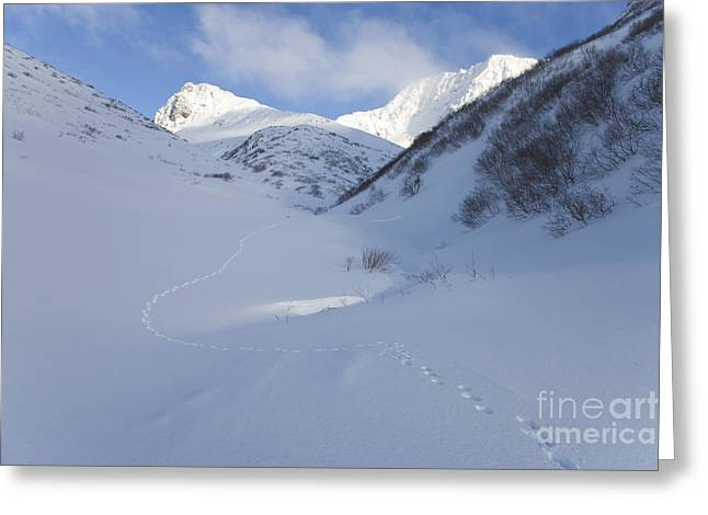Lynx Tracks In A Mountain Pass Greeting Card by Tim Grams