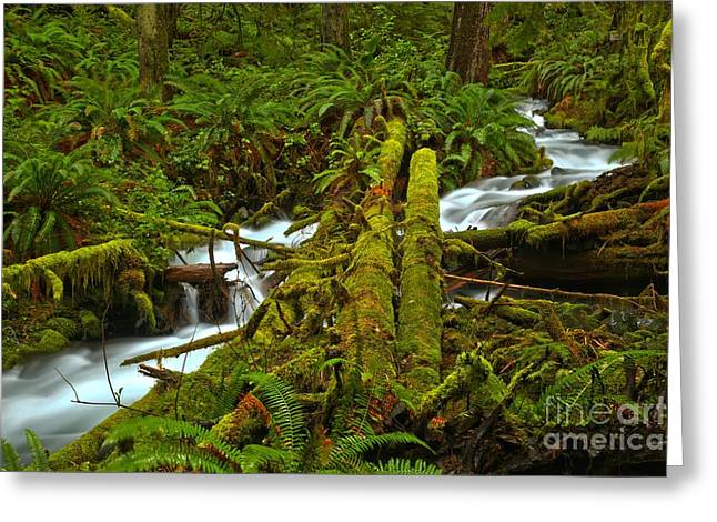 A Stream Of Tranquility Greeting Card by Adam Jewell