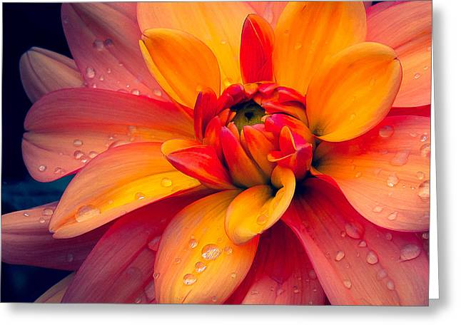 Maarn Dahlia And Drops Greeting Card by Julie Palencia