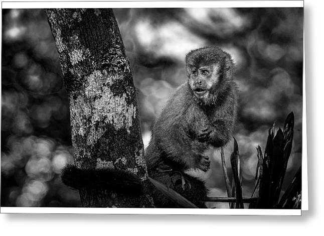 Macaco Prego II Greeting Card