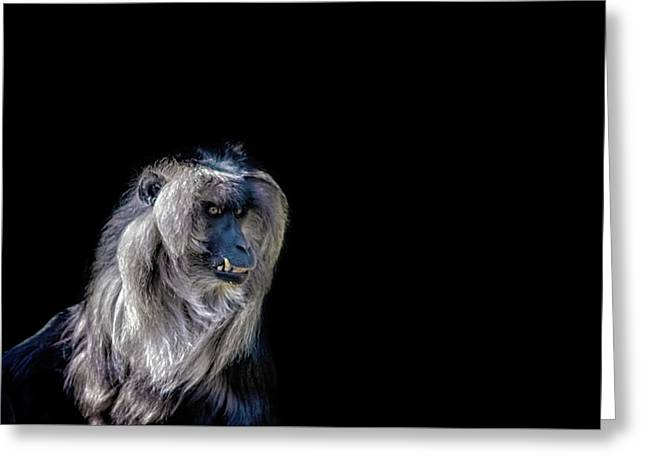 Macaque Greeting Card by Martin Newman