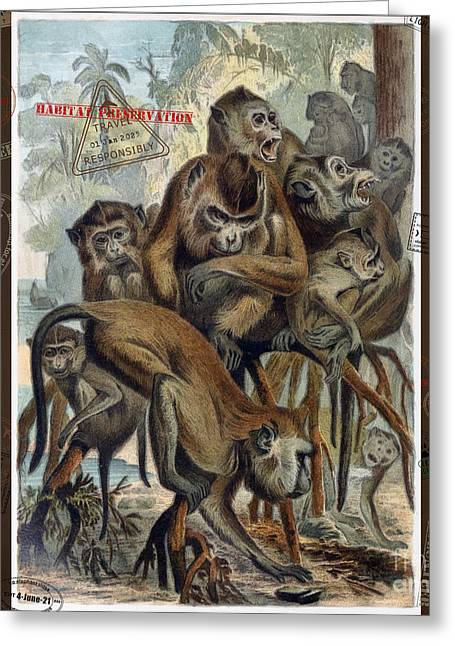 Greeting Card featuring the digital art Macaques For Responsible Travel by Nola Lee Kelsey