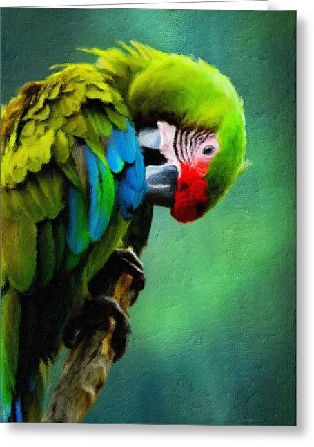 Macaw Green Feather Preen Greeting Card