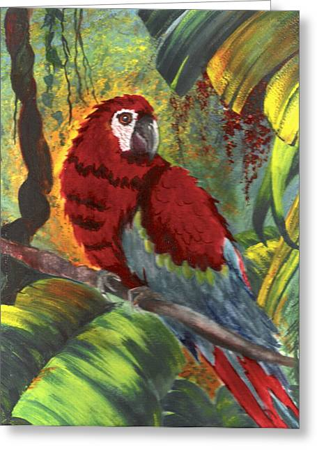 Macaw In Early Light Greeting Card