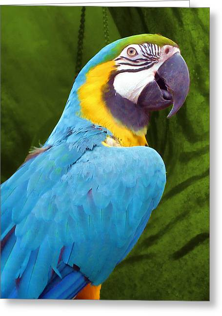 Macaw Greeting Card by JAMART Photography