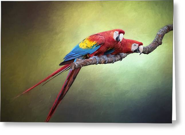 Macaw Parrots Out On A Limb Greeting Card by David and Carol Kelly
