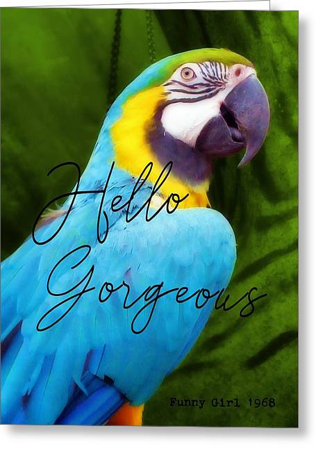Macaw Quote Greeting Card by JAMART Photography