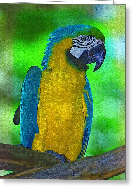 Parrot Pyrography Greeting Cards - Macaw Greeting Card by Richard Nickson