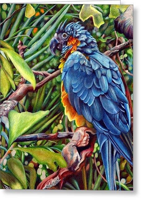 Macaw Greeting Card by Sonja Funnell