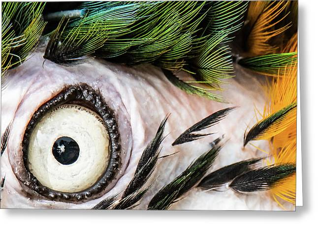 Macaw Up Close And Personal Greeting Card