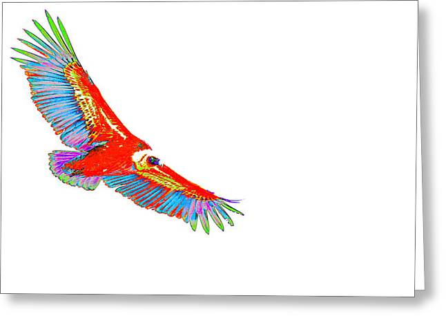 Macaw Vulture Greeting Card