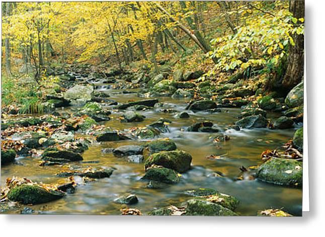 Macedonia Brook State Park, Connecticut Greeting Card