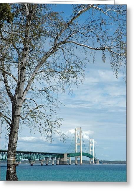 Greeting Card featuring the photograph Mackinac Bridge Birch by LeeAnn McLaneGoetz McLaneGoetzStudioLLCcom