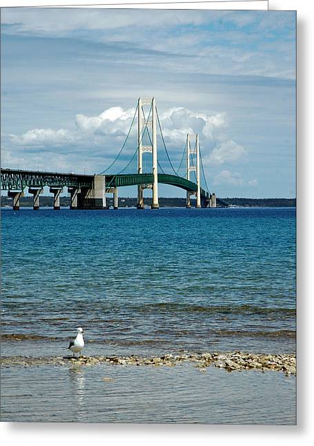 Greeting Card featuring the photograph Mackinac Bridge With Seagull by LeeAnn McLaneGoetz McLaneGoetzStudioLLCcom