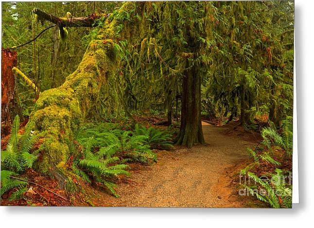 Macmillan Cathedral Grove Greeting Card by Adam Jewell