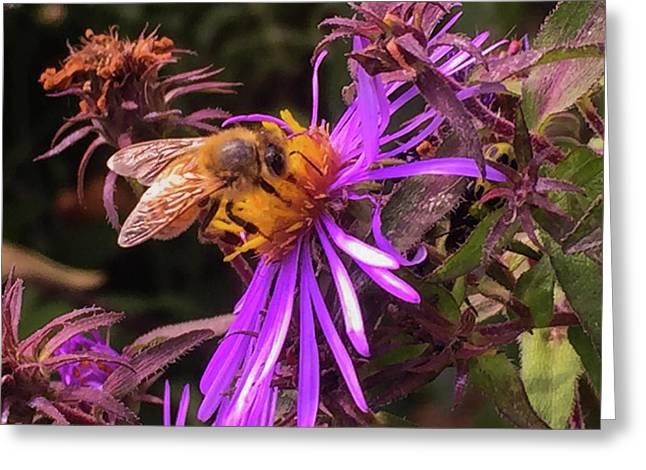 Macro Bee IIi Greeting Card