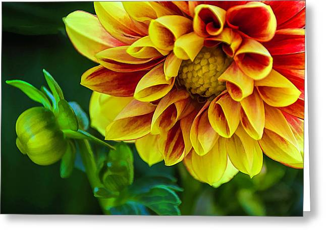 Greeting Card featuring the photograph Macro Dahlia by Julie Palencia