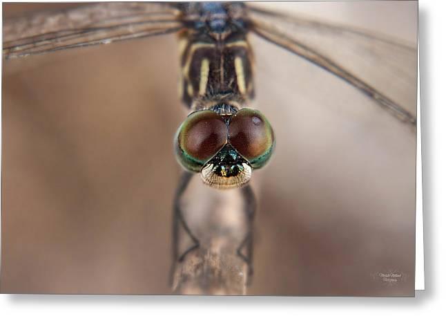 Macro Dragonfly Greeting Card
