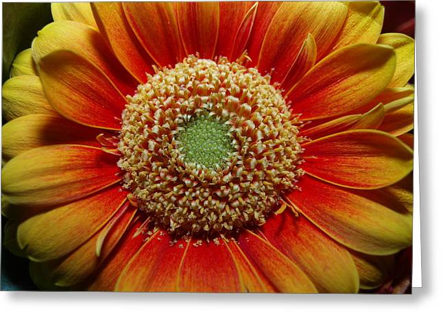 Greeting Card featuring the photograph Macro Flower by Michael Canning