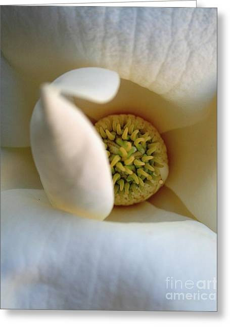 Macro Magnolia Greeting Card
