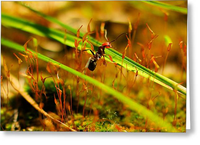 Macro Of An Ant Greeting Card