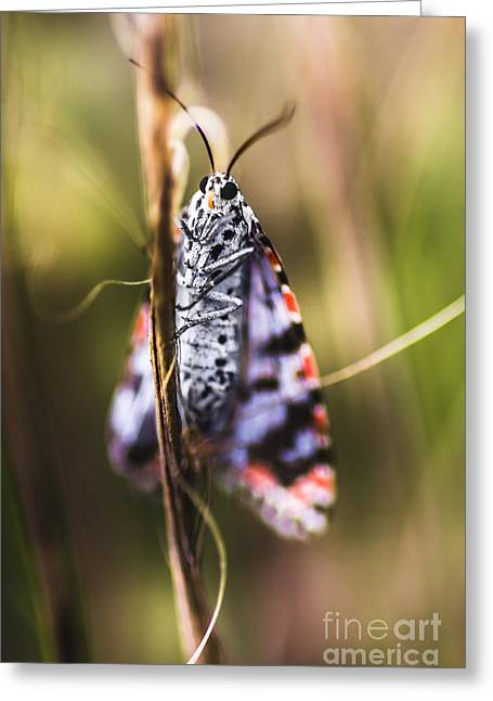 Macro Of Colourful Moth Insect Holding Branch Greeting Card