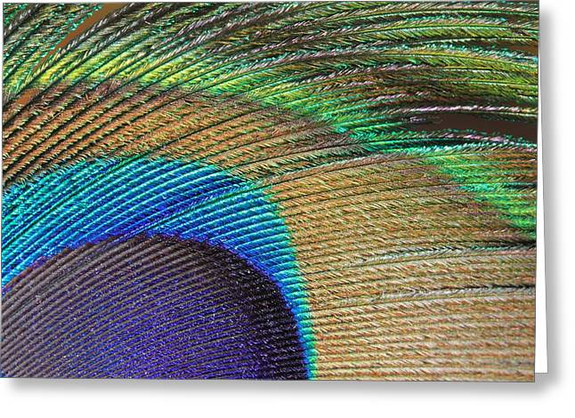 Macro Peacock Feather Greeting Card