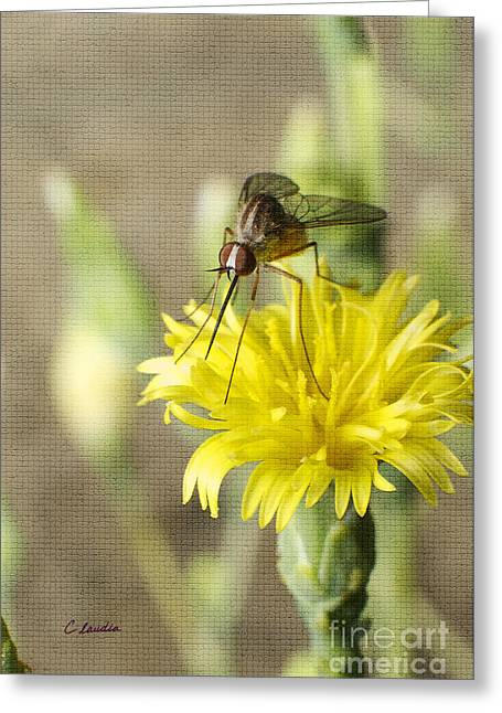 Macro Photography Of A Mosquito Over A Lettuce Flower Greeting Card by Claudia Ellis