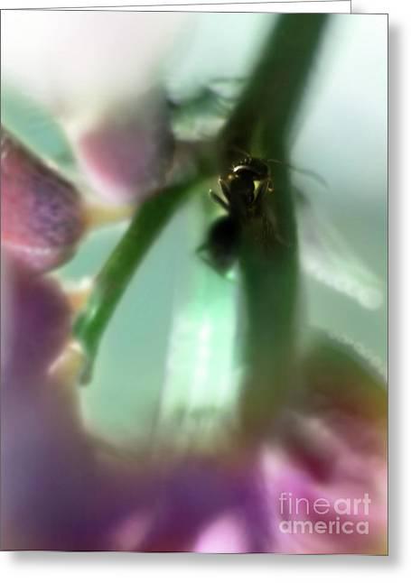 Macrocosmos Greeting Card by Angel  Tarantella
