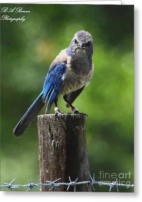 Mad Bird Greeting Card