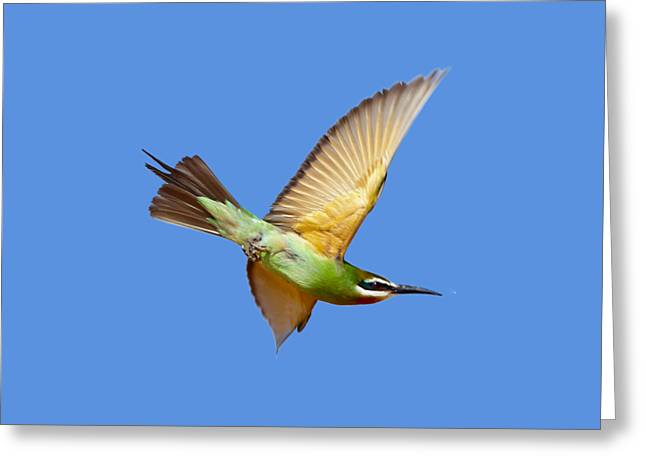 Madagascar Bee-eater T-shirt Greeting Card