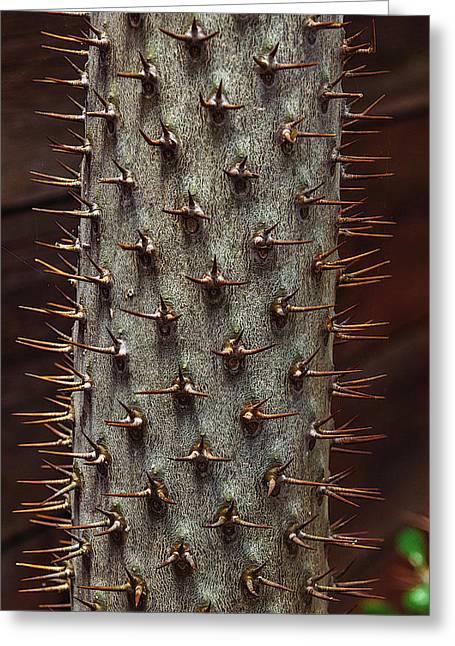 Madagascar Palm Greeting Card