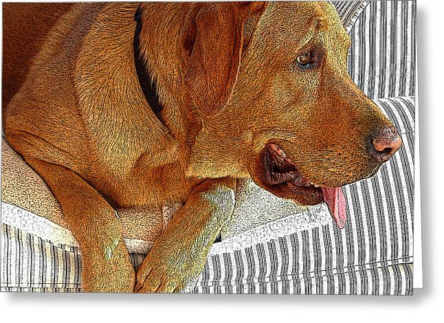 Maddie Greeting Card by Diane E Berry