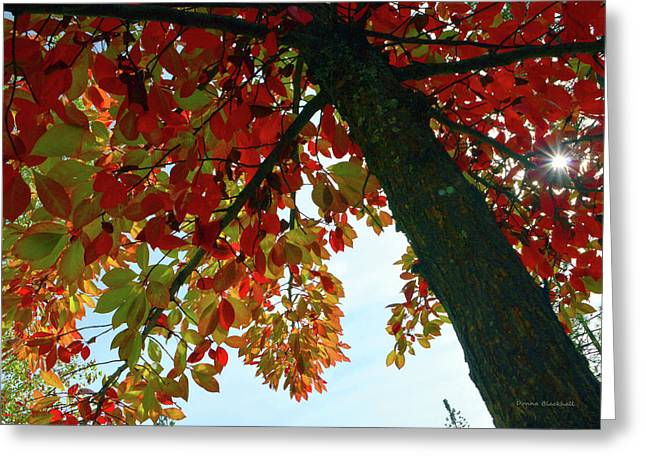 Made In The Shade Greeting Card by Donna Blackhall