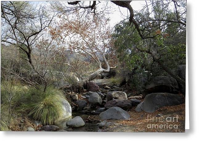 Madera Creek Greeting Card by Feva Fotos