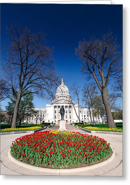 Madison Capitol Tulips Greeting Card