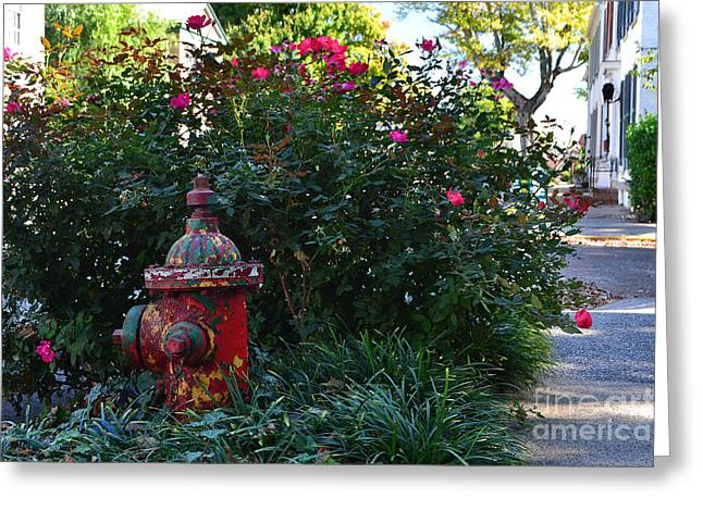 Madison Fire Hydrant Greeting Card by Amy Lucid