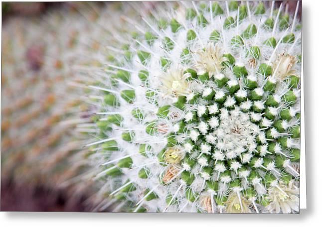 Madrid Botanical Garden 1 Greeting Card by Ana Mireles