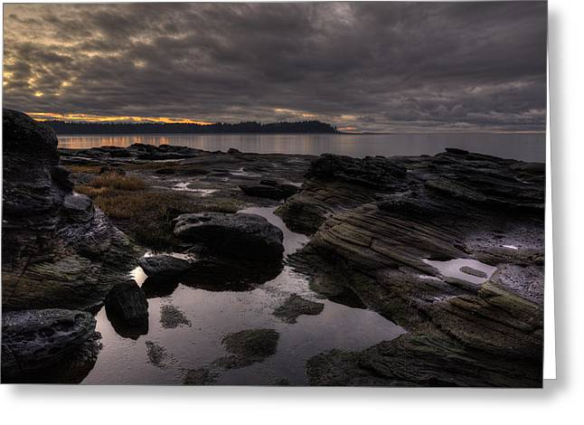 Madrona Evening 2 Greeting Card by Randy Hall