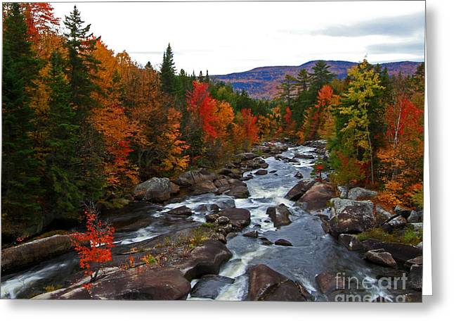 Magalloway River In Fall Greeting Card
