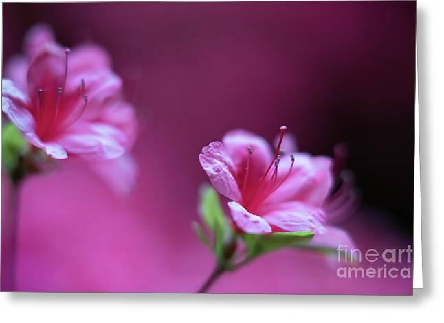 Magenta Flowers Azaleas Greeting Card by Mike Reid